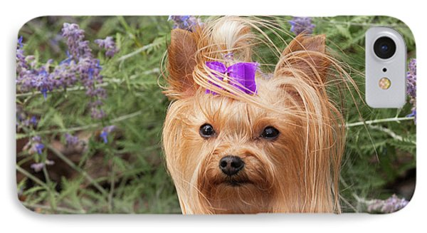Purebred Yorkshire Terrier With Purple IPhone Case by Piperanne Worcester