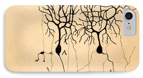 Purkinje Cells By Cajal 1899 IPhone 7 Case