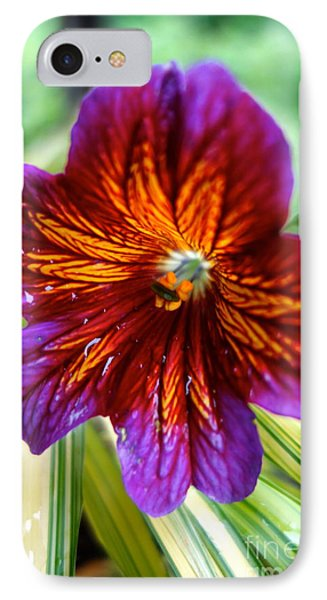 Purple And Orange IPhone Case by Jacqueline Athmann