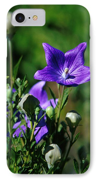 Purple Balloon Flower IPhone Case by Anonymous