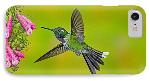 Purple-bibbed Whitetip Hummingbird Phone Case by Anthony Mercieca