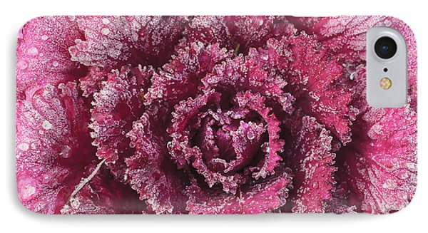 Purple Cabbage On A Frosty Morning Mill Phone Case by Stuart Westmorland