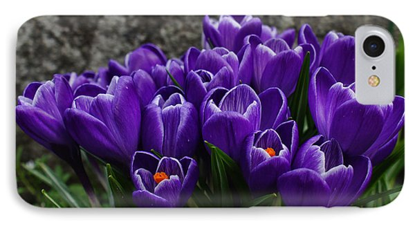 Purple Crocus IPhone Case by Ron Roberts