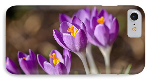 Purple Crocus IPhone Case by Scott Carruthers