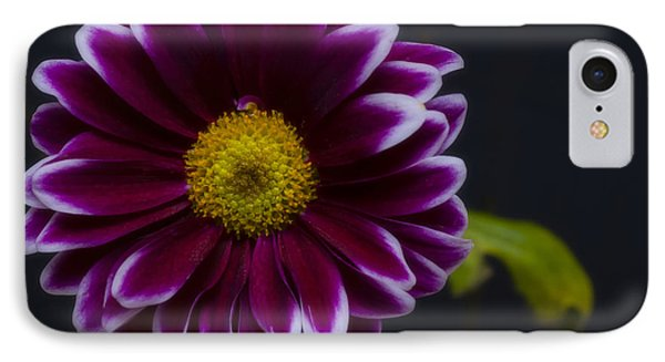 Purple Daisy Phone Case by Dennis Reagan