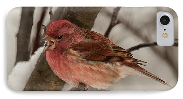 IPhone Case featuring the photograph Purple Finch Bird Song by Lara Ellis