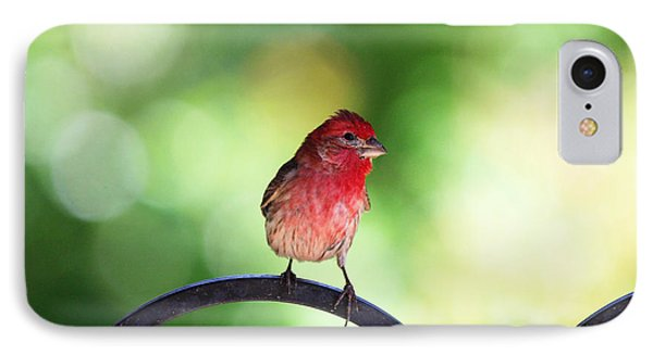 IPhone Case featuring the photograph Purple Finch by Trina  Ansel