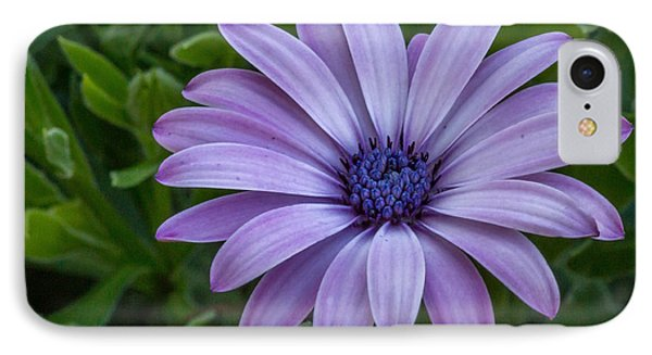 IPhone Case featuring the photograph Purple Flower  by Trace Kittrell
