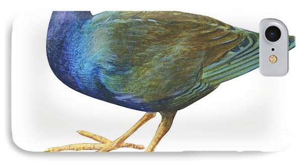 Purple Gallinule Phone Case by Anonymous