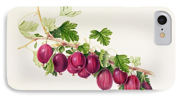 Purple Gooseberry IPhone Case by William Hooker