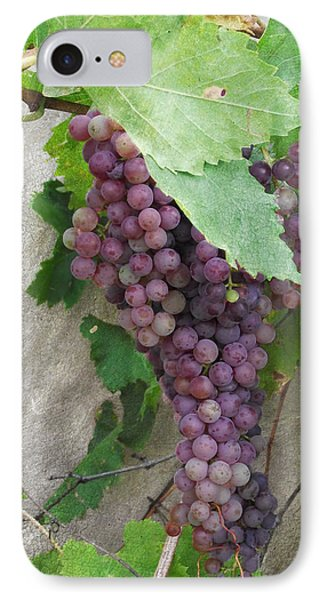 Purple Grapes On The Vine IPhone Case by Jayne Wilson