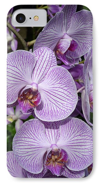 IPhone Case featuring the photograph Purple Ladies by Cindy McDaniel