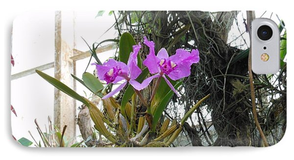 Purple Orchid IPhone Case by Kay Gilley