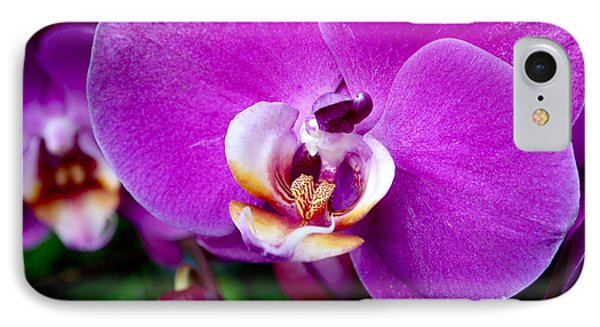 Purple Orchid IPhone Case by Rona Black