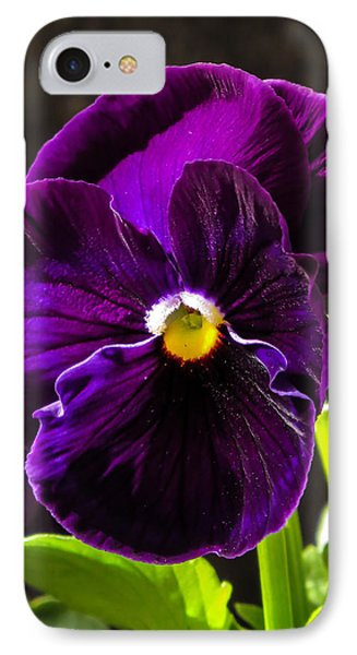 Purple Pansy IPhone Case by Zina Stromberg