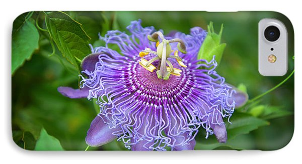Purple Passion Flower IPhone Case by Lynn Bauer