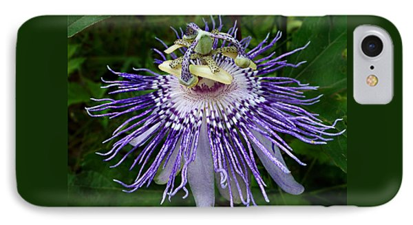 Purple Passionflower IPhone Case