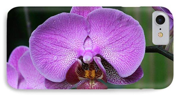 Purple Phalaenopsis Orchids IPhone Case