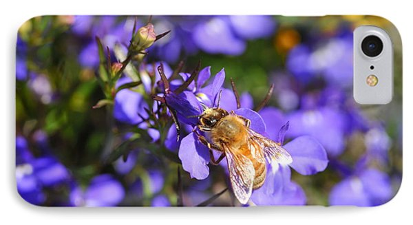Purple Pollination  IPhone Case by Crystal Hoeveler