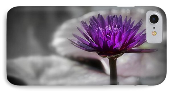 Purple Pond Lily IPhone Case by Lynn Sprowl