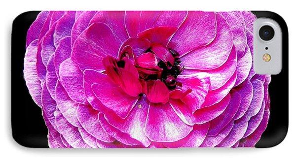 Purple Ranunculus Phone Case by Rose Santuci-Sofranko