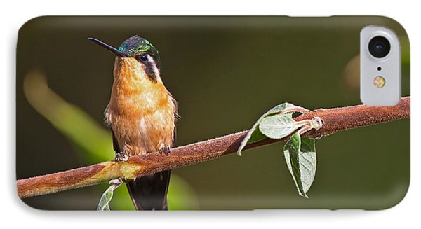 Purple-throated Mountain-gem IPhone Case