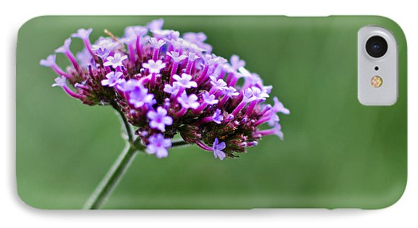IPhone Case featuring the photograph Purple Top Flower by Maria Janicki