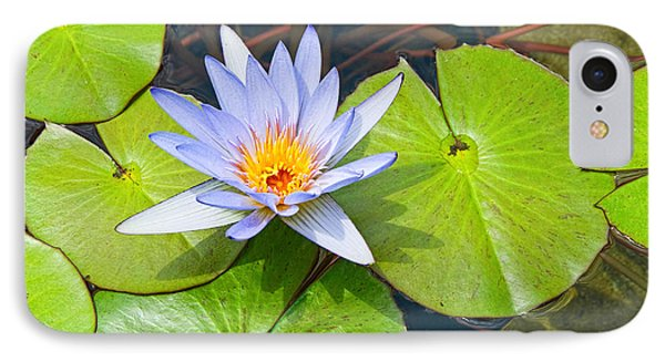 Purple Water Lily In Pond. IPhone Case by Jamie Pham