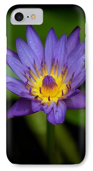 Purple Water Lily IPhone Case by Pamela Walton