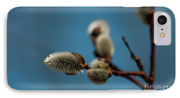 Pussy Willow... IPhone Case by Nina Stavlund