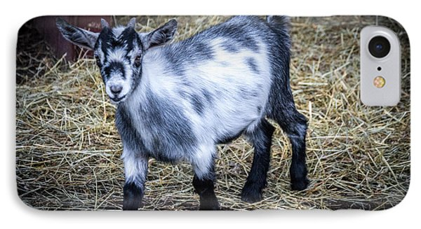 Pygmy Goat IPhone Case