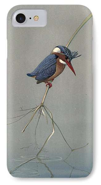 Pygmy Kingfisher IPhone Case by Rob Dreyer