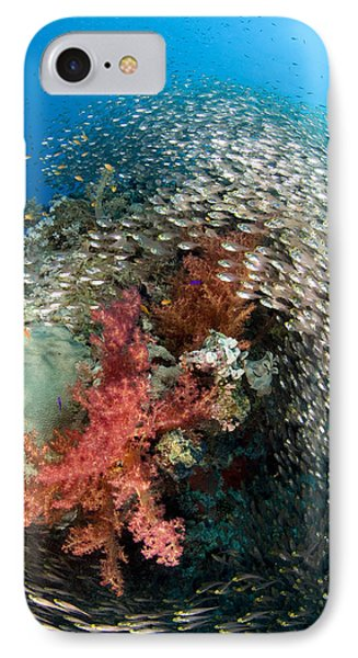 Pygmy Sweeper School Red Sea Egypt IPhone Case