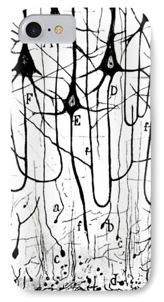 Pyramidal Cells Illustrated By Cajal Phone Case by Science Source