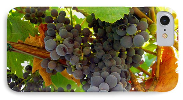Pyrenees Winery Grapes IPhone Case