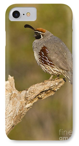 Quail On A Stick Phone Case by Bryan Keil