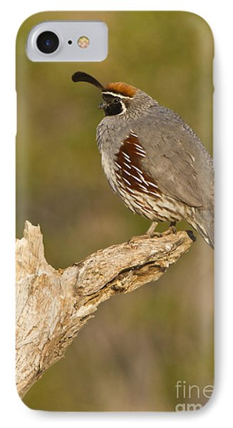 IPhone Case featuring the photograph Quail On A Stick by Bryan Keil
