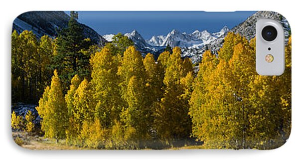 Quaking Aspens Populus Tremuloides IPhone Case