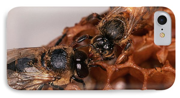 Honeybee iPhone 7 Case - Queen And Drone Honeybees by Sinclair Stammers/science Photo Library