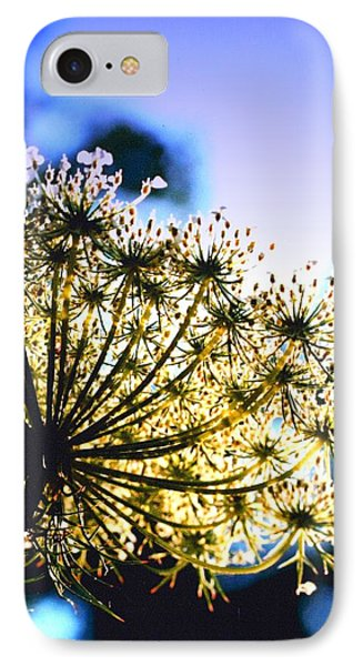 Queen Anne's Lace II Phone Case by Diane Merkle