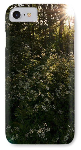 Queen Anne's Lace On The Woodland Floor IPhone Case by David Isaacson