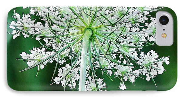 Queen Ann's Lace IPhone Case by Al Fritz