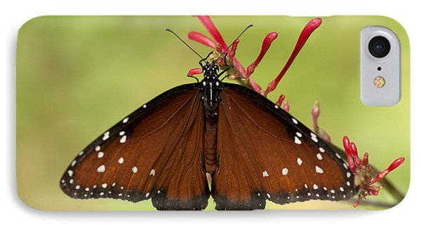 Queen Butterfly IPhone Case by Meg Rousher