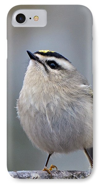 Queen Of The Kinglets IPhone Case by Stephen Flint