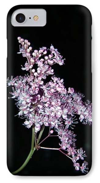 Queen Of The Prairie Meadowsweet IPhone Case by  Andrea Lazar