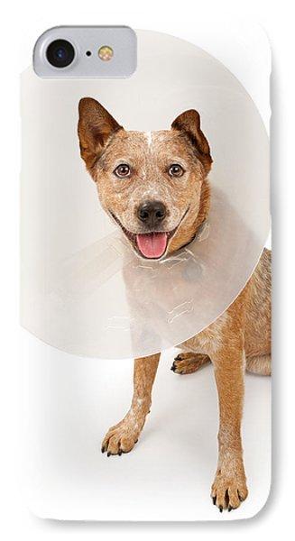 Queensland Heeler Dog Wearing A Cone Phone Case by Susan Schmitz