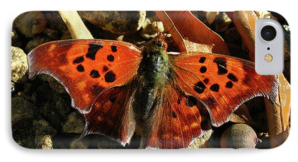 IPhone Case featuring the photograph Question Mark Butterfly by Donna Brown