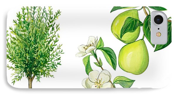 Quince Tree IPhone Case by Anonymous
