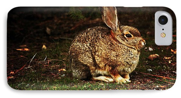 IPhone Case featuring the photograph Rabbit  by Marjorie Imbeau