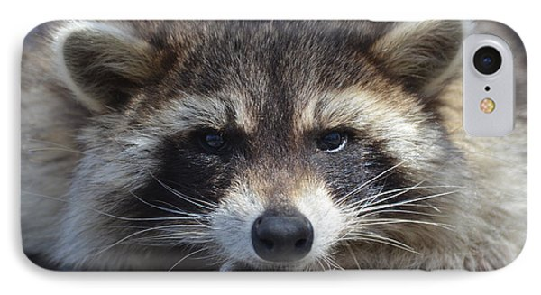 Raccoon -p IPhone Case